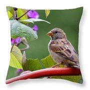 House Sparrow On A Wheel Throw Pillow