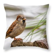House Sparrow Passer Domesticus On The Perch Throw Pillow