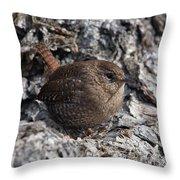 Winter Wren Dsb188 Throw Pillow