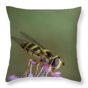 Hoverefly - Syrphus Vitripennis Throw Pillow