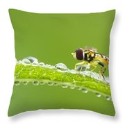 Hoverfly In Dew Throw Pillow
