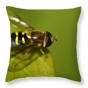 Hoverfly On A Leaf Throw Pillow
