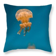 Hovering Spotted Jelly 1 Throw Pillow