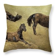 How A Black Horse Turns Brown - Pryor Mustangs Throw Pillow
