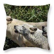 Howlin Artic Wolves Throw Pillow