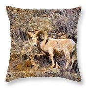 Huge Bighorn Throw Pillow