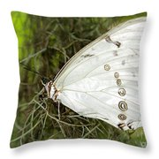 Huge White Morpho Butterfly Throw Pillow