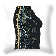 Human Body Showing Autonomic Nervous Throw Pillow