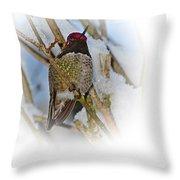 Humming Bird And Snow 4 Throw Pillow