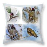 Humming Bird And Snow 4 Pack Throw Pillow