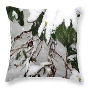 Humming Bird And Snow Throw Pillow