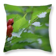 Humming Buds By Jammer Throw Pillow