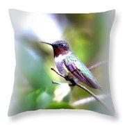 Hummingbird - Beautiful Throw Pillow
