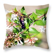 Hummingbird Clearwing Moth Throw Pillow