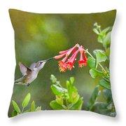 Hummingbird Dives In  Throw Pillow