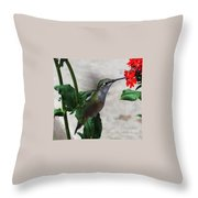 Hummingbird Feeding Throw Pillow