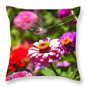 Hummingbird Flight Throw Pillow by Garry Gay