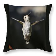 Hummingbird Greeting Throw Pillow