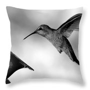 Hummingbird In Black And White Throw Pillow