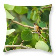 Hummingbird In Tree Throw Pillow
