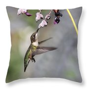 Hummingbird - Little Sipper Throw Pillow