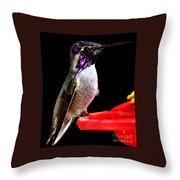 Hummingbird Male Anna Throw Pillow