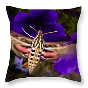 Hummingbird Moth   #8612 Throw Pillow