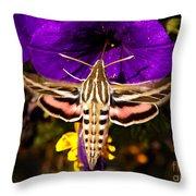 Hummingbird Moth   #8645 Throw Pillow
