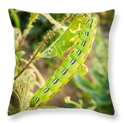 Hummingbird Moth Caterpillar Throw Pillow