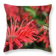 Hummingbird Moth Feeding On Red Flower Throw Pillow
