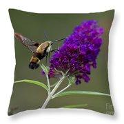 Hummingbird Moth Iv Throw Pillow