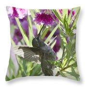 Hummingbird On A Desert Willow Throw Pillow