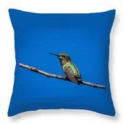 Hummingbird Posing Throw Pillow