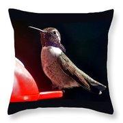 Hummingbird Posing On Perch Throw Pillow