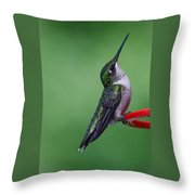 Hummingbird Profile Throw Pillow