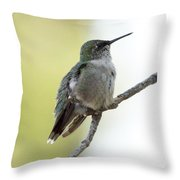 Hummingbird Sitting On A Branch Throw Pillow