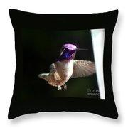 Hummingbrid Male Costa Throw Pillow