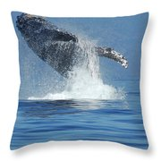 Humpback Whale Breaching Throw Pillow by Bob Christopher