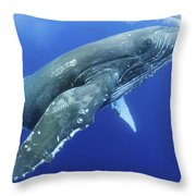 Humpback Whale Near Surface Throw Pillow