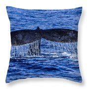 Humpback Whale Tail Fluke During Deep Dive Throw Pillow by Puget  Exposure