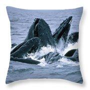 Humpback Whales Gulp Feeding On Herring Throw Pillow