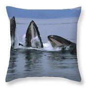Humpback Whales Gulp Feeding Southeast Throw Pillow
