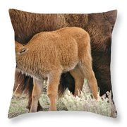 Hungry Baby Bison Throw Pillow