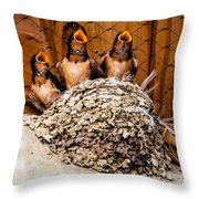 Hungry Baby Swallows - Antelope Island - Utah Throw Pillow