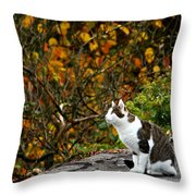Hungry Cat Throw Pillow