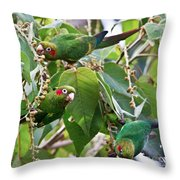 Hungry Chiriqui Conures Throw Pillow