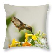 Hungry Flowerbird Throw Pillow