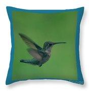 Hungry Little Hummingbird 4 Throw Pillow