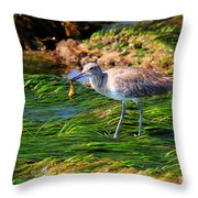 Hungry Willet Throw Pillow