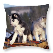 Huskies On A Sled Throw Pillow